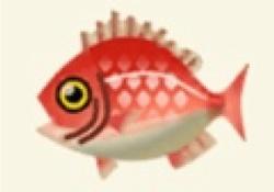 【ポケ森】釣りイベ初日にタイが20匹以上売れた理由がコチラwwwww