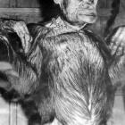 パン くん 殺 処分 チンパンジー