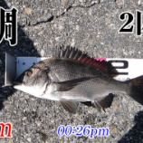 『大島ミカン頂きました!周防大島の黒鯛(チヌ)釣り#017』の画像