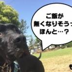 gundogrescue CACI活動ブログ