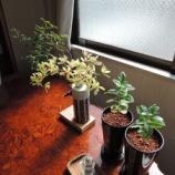 『朝は 植木から』の画像