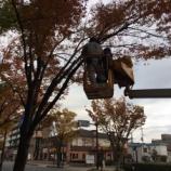『11月26日の点灯式に向けて上戸田イルミネーションの設置工事が始まりました!』の画像
