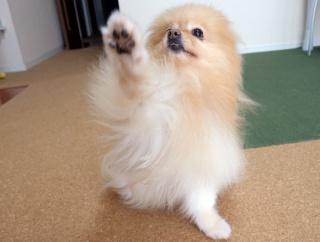 犬と人間が交わしたWin-Winな契約