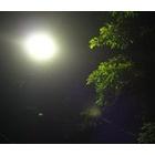 『街灯に集う』の画像