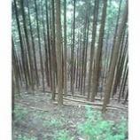 『美しい森林』の画像