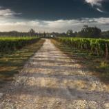 『ワインの温度管理についてソムリエ必読の記事3選』の画像