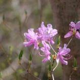 『芦花相対開:様々な白』の画像