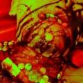 豹牙チョコレート祭!