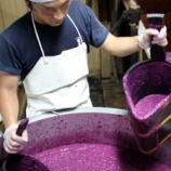 『紅芋酢の仕込みをご紹介します その2 〜紅芋酒の搾り〜』の画像