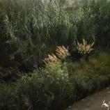 『蛍の数え方』の画像
