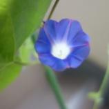 『人生に花を咲かせる』の画像