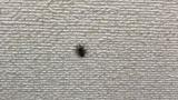 これっていいクモ?悪いクモ?(※画像あり)