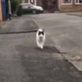 ネコがてくてく歩いてきた。なにごとだぁ!? → 猫はこうなる…