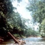 『行った気になる世界遺産 リオ・プラタノ生物圏保護区』の画像
