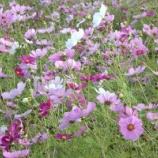 『季節の花に癒される! 予定外の楽しい1日でした!!』の画像