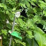 『アベックの蝶々』の画像