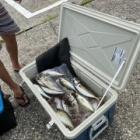 『7月20日アジ釣り』の画像