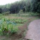 児沢の畑の草刈り 9月21日