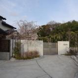 『門裏の枝垂れ桜』の画像