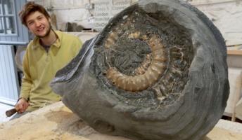 犬の散歩中に2億年前のアンモナイトの化石を発見 状態も良く大きさも良好