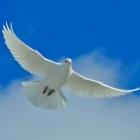 『徒然霊草19 はるかに超える力を求めて!神の偉大な約束の10項目』の画像