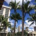 いいかげん1年たったのでハワイ旅行のブログを書きます。
