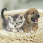 ペット事情 猫が犬を逆転か?