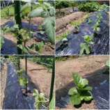 『野菜のお勉強』の画像