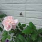 『【庭で大きな被害を出す害虫8種】冬の間にやっておきたい作業』の画像
