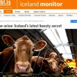 『牛さんのおしっこ、アイスランド美容』の画像