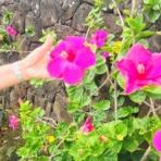 ミチコのハワイ不動産ブログ fudousanhawaii.net