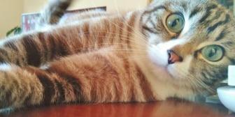 【衝撃】上の階の人が猫を飼うからって手土産持って挨拶に来た。→猫なんて物音立てないだろうにどうして挨拶なんてしに来るんだろうとか思ったが、早朝から…