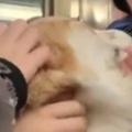イヌと一緒に電車に乗ってみた。小学生の集団がいた → うちの犬はこうなった…