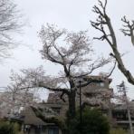 北村 範史のblog