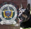 麻薬捜査犬を「殺せ」 コカインなど違法薬物摘発に大活躍、麻薬密売組織のボスが約77万円の賞金を懸ける