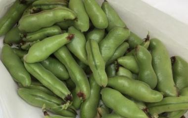 『大変です!!空豆大量収穫です!!』の画像