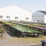 『シクラメン農園と都立六道山公園;11月』の画像