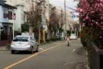 梅が咲きだした松塚の道~交野まちなみ日記No.40~