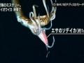 史上初の快挙!NHK、深海で泳ぐダイオウイカを世界初放送…13日・NHKスペシャル
