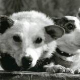 『ベルカとストレルカ 宇宙犬』の画像