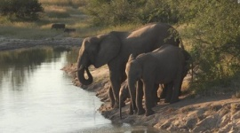 【南ア】サイの密猟者、象の群れに踏まれて死亡