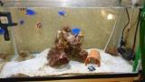 海水水槽作ってから1ヶ月が経とうとしてる(※画像あり)