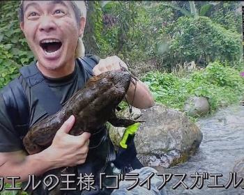【悲報】爬虫類ハンター加藤さん、仕込みのカエルだと知らずに大はしゃぎしてしまう