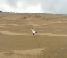『【カントリー・ガールズ】今日の山木梨沙お嬢様のブログwwwwwwwwwwwww』の画像