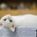 『猫よ、ありがとう』の画像