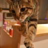 世界で一番可愛い猫