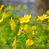 『【写真】 新宿の春! a7R』の画像