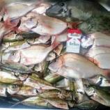 『ボウズに立ち向かう最強のヘボ釣り師日誌2』の画像