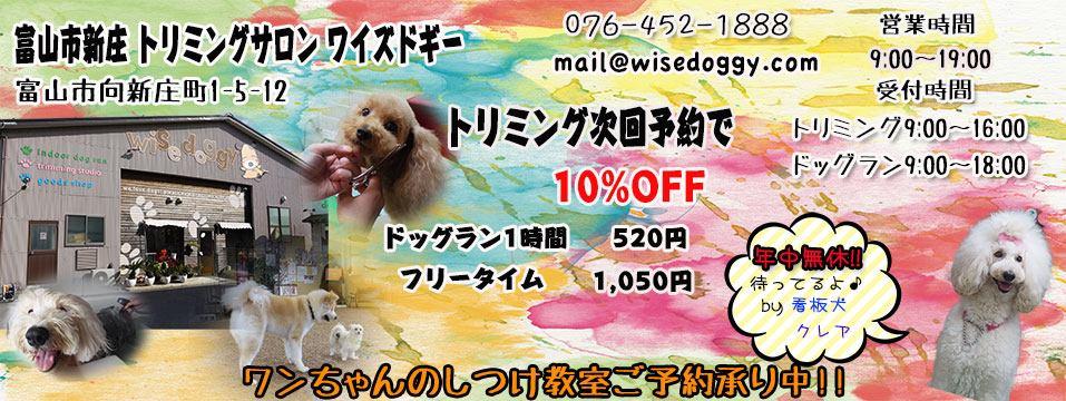 トリミングサロン ワイズドギー 富山新庄店 スタッフブログ イメージ画像