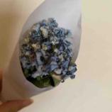 『6月に行う紫陽花のおまじない』の画像